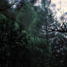 freetoedit remix interesting nature photography