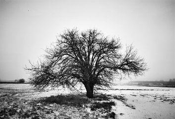 tree travel nature one blackandwhite freetoedit