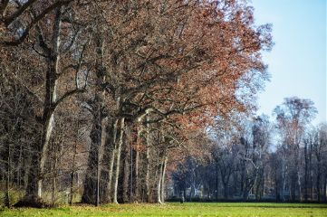 nature trees leaves freetoedit