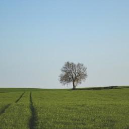 treeoflife freetoedit tree nature remixit