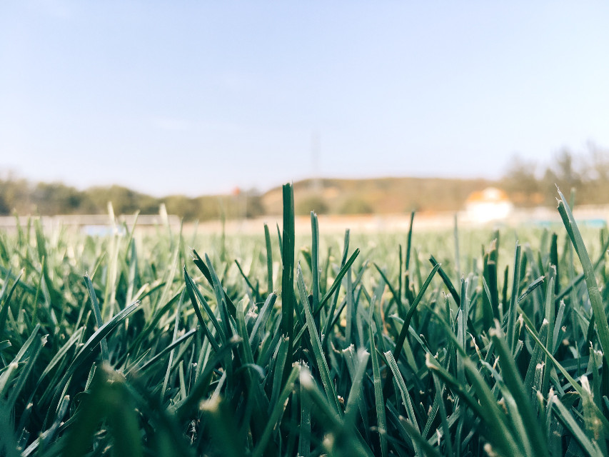 #FreeToEdit 小草#nature #grass