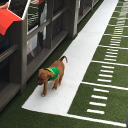 freetoedit puppybowl superbowl biggame