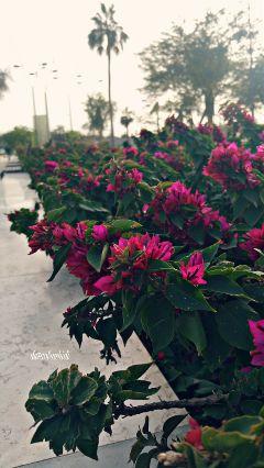 flowers flowerphotography flowerslovers floweroftheday pink