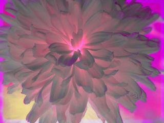 flower flowerpower flowershot cute tinacruz