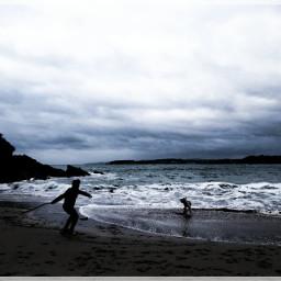teo labrador labradorretriever dogs beach freetoedit