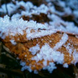 photography photo nature naturelovers nature_perfection freetoedit