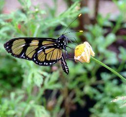 butterfly butterflies nature naturephotography naturelovers