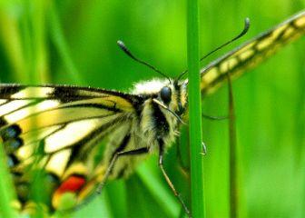 dpcbutterfly