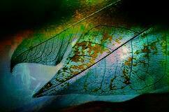 freetoedit nature photography