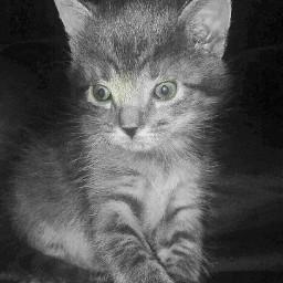 baby kitty kittylove kittysmash1 kittykat