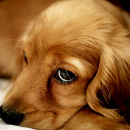 dog adorable freetoedit