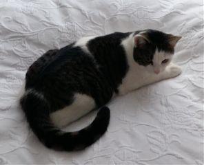 cute cat catsofpicsart catlover