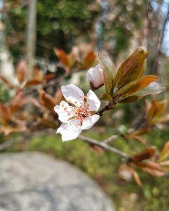 blossom flowers beautifulflowers beautifulnature spring
