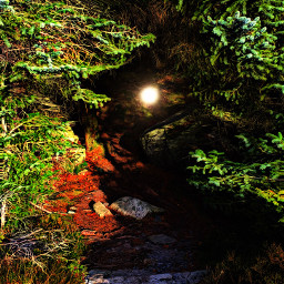 intothewoods intothelight woods trees path freetoedit