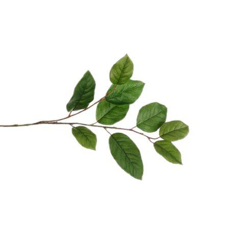 freetoedit leaves simple minimalism
