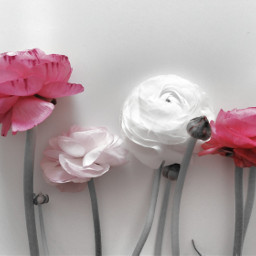 flower nature blossom white purple