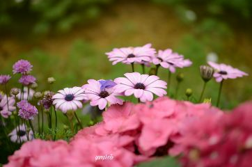 spring#nature#flowers#photography spring nature flowers photography