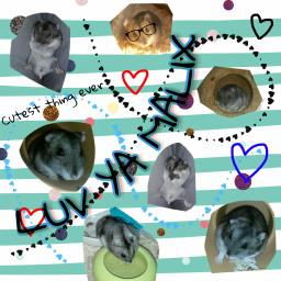 cuteness hamster myhamster sweethamster luvya