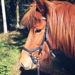 gaila g pony isilove wood